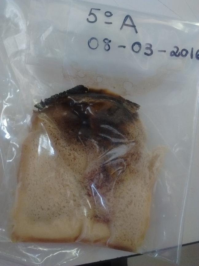 Ação dos decompositores no pão industrializado