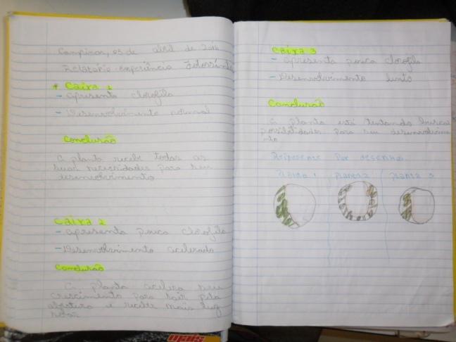Relatório de observação com experiência de fotossíntese