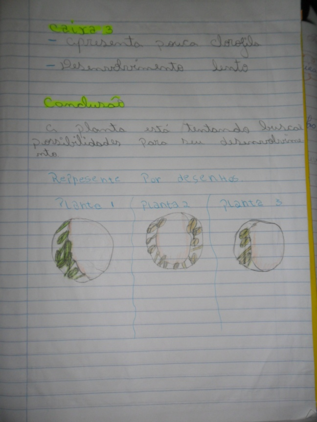 observação fotossíntese