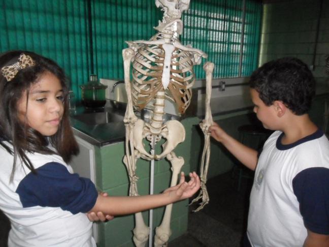 Aula de Ciências, alunos observam sistema esquelético humano