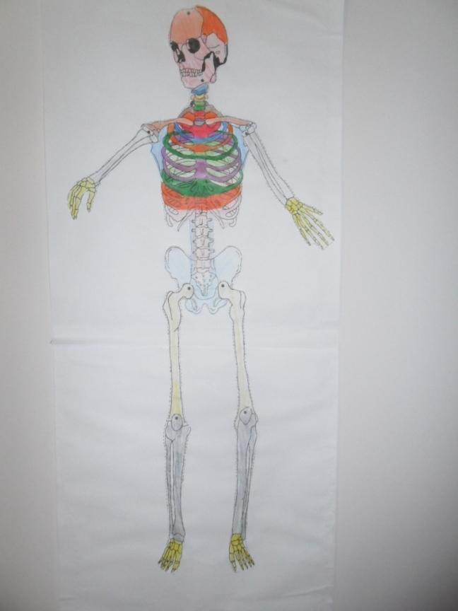 Esqueleto de papel já montado