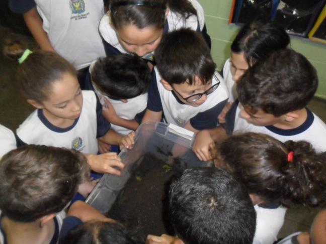 Imagem mostra alunos do quarto ano do ensino fundamental observando o minhocário
