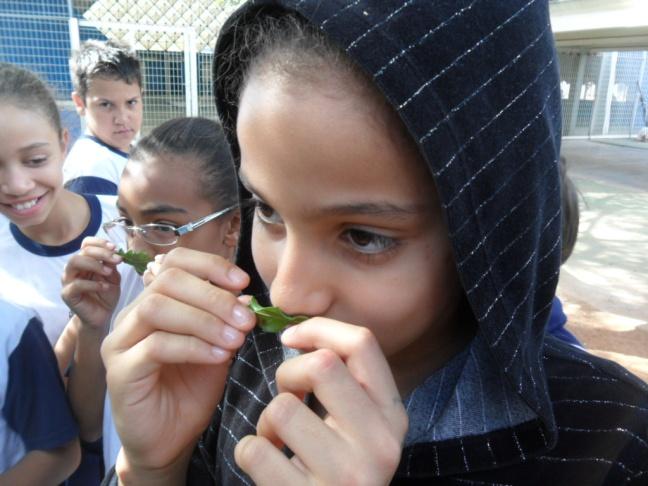 Aula de Ciências, alunos observam plantas na área da escola