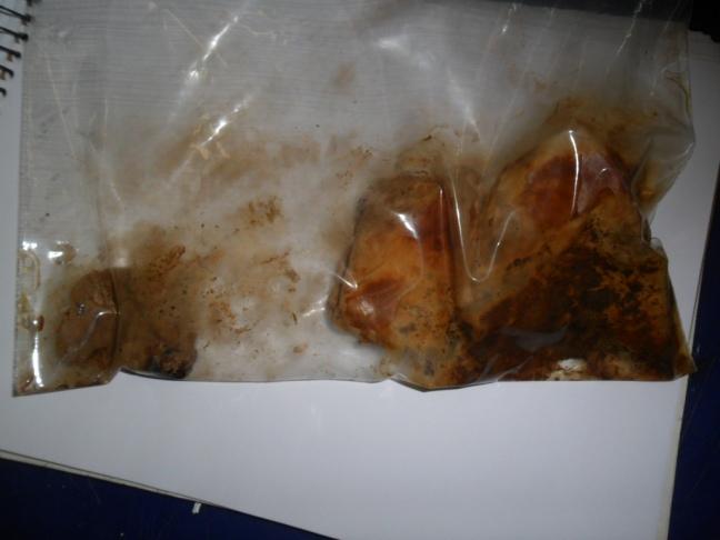 Pão caseiro sob a ação de fungos