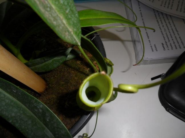 Observe a cavidade da planta