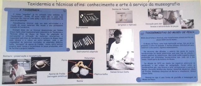 Taxidermia, museu de pesca, Santos, São Paulo