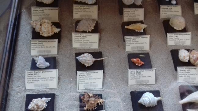 mostruário de conchas, museu de pesca, Santos, SP