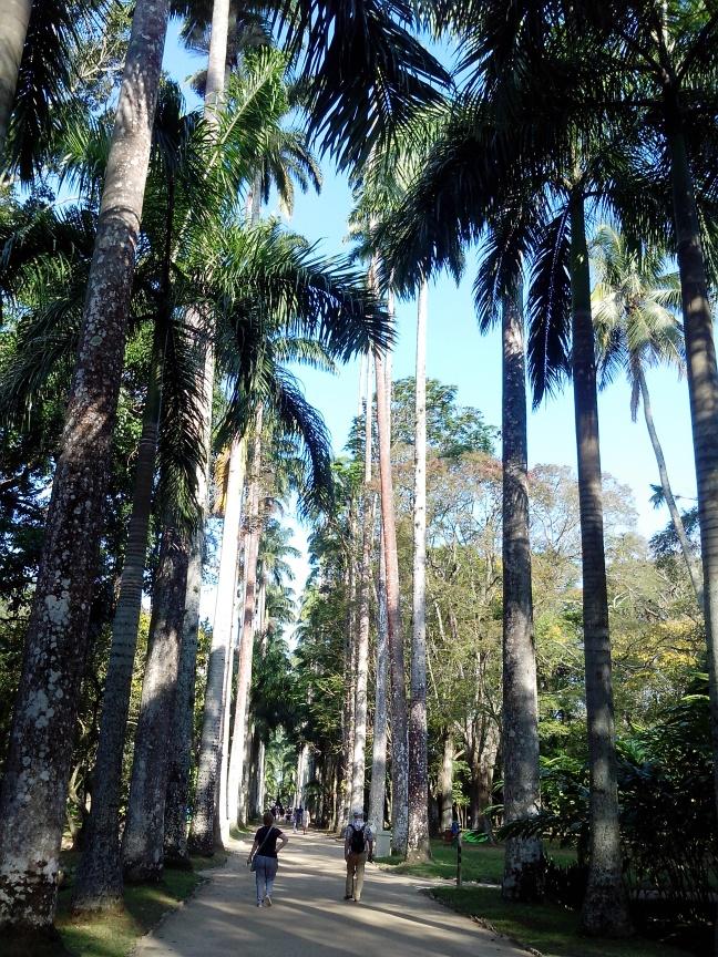 As palmeiras imperiais são um dos elementos mais marcantes do Jardim Botânico
