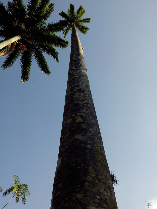 Minhas experiências fotográficas... tirando foto da palmeira com a câmera na base! \o/