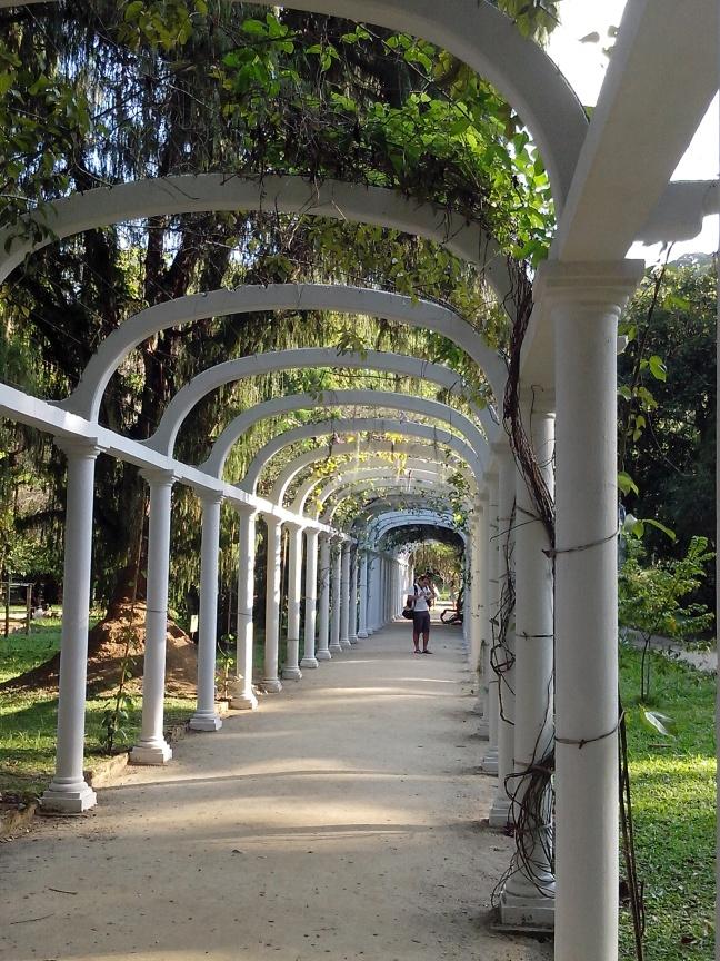 Um dos muitos caminhos (aleias) do Jardim Botânico