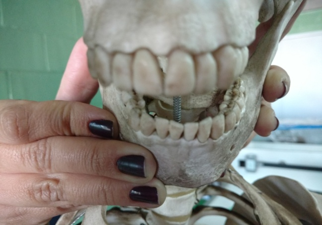 sistema digestório boca dentes
