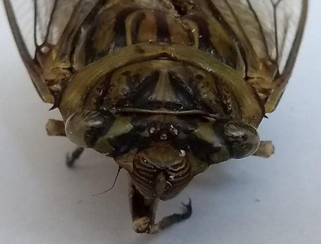 Sequência didática. respiração dos insetos. Conteúdo de Ciências. Anos Iniciais. Ensino Fundamental