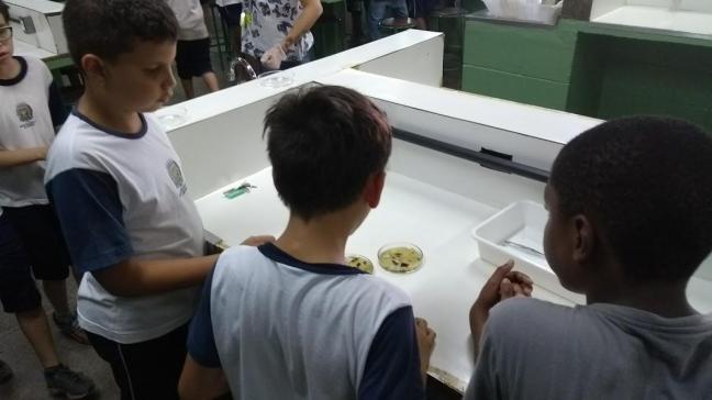 Experiência em sala de aula microrganismos vírus fungos bactérias meio de cultura anos iniciais ensino fundamental ensino de ciências